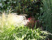 jardines de vivaces