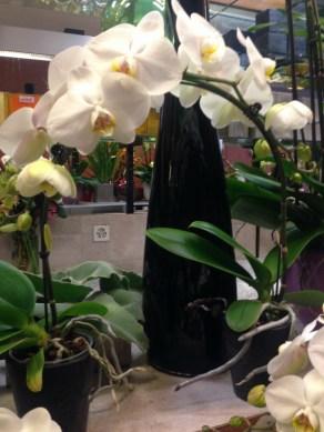 Perillard-fleurs-halle-de-rive-01
