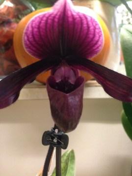 Perillard-fleurs-halle-de-rive-05