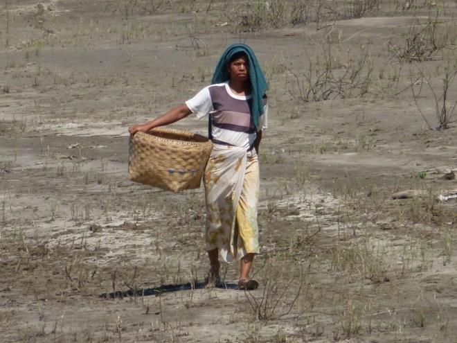 Rives de l'Ayeyarwaddy