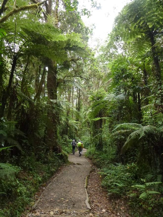Forêt et fougères géantes