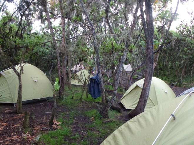 Camp à Machame Hut (3000m)