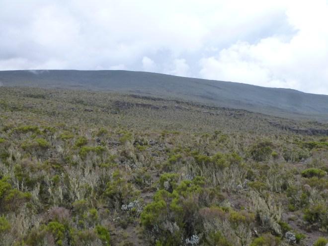 Descente vers Mweka Camp (3000m)