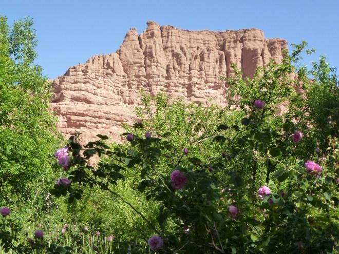 Vallée des roses - Maroc