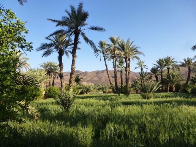 Vallée du Drâa - Maroc