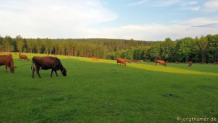 Glückliche Kühe (Lahnhof)