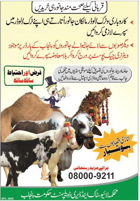 eid ul azha Pakistan punjab helpline