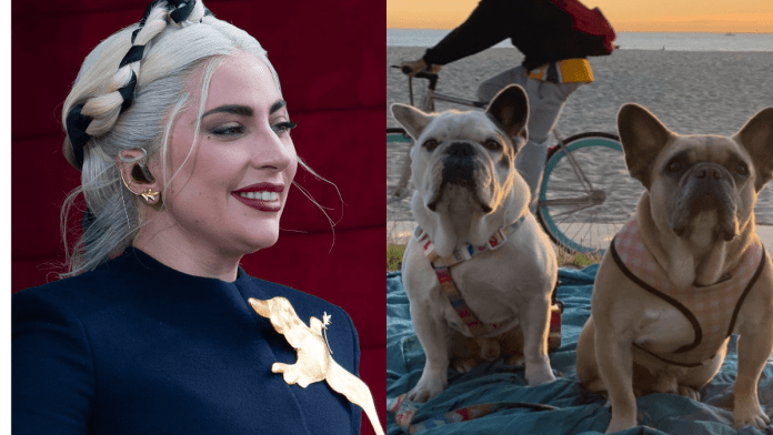 Lady Gaga Bulldogs