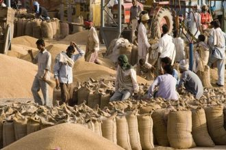 Wheat procurement by Government starts in Mandi Bahauddin