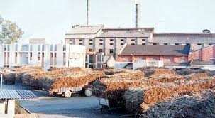 Sugar mills mafia blackmailing Govt and farmers