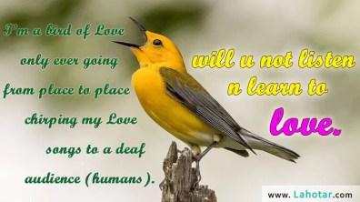 I'm a bird of Love…