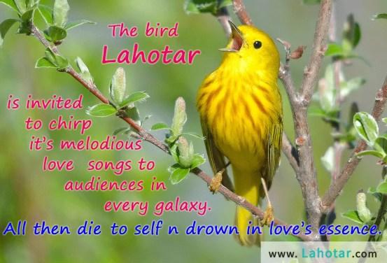 The bird Lahotar…