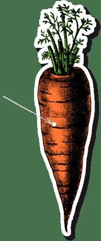 Zanahorias, color naranja