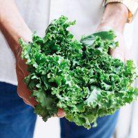 Cultivo de Kale