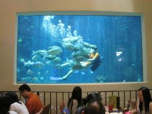 062B-21 mars Hawaii Oceanarium