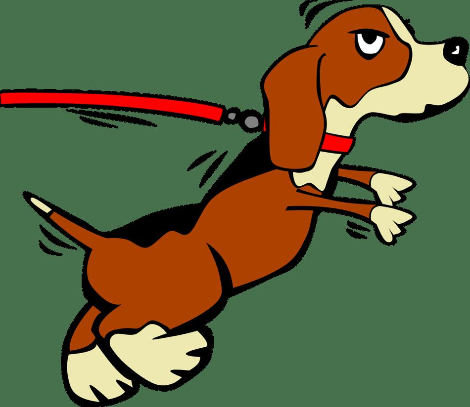 20170905D Ciker-Free-Vector-Images, Pixabay
