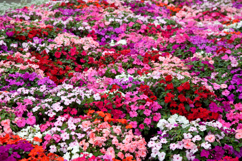 20180528A plantslive.in.jpg