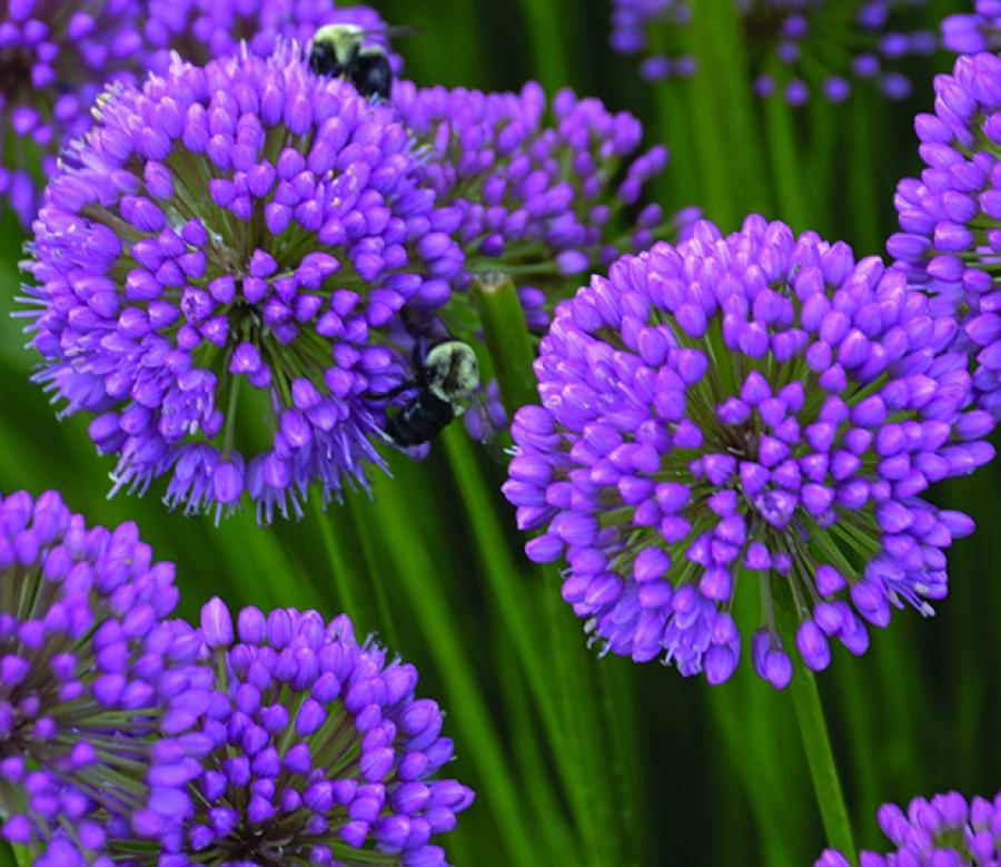 20180602A Perennial Plant Association