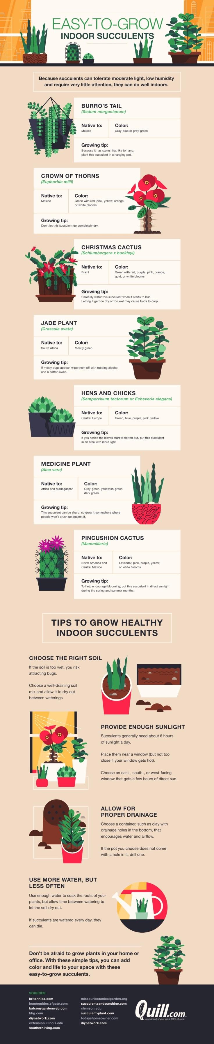 Easy-to-grow-indoor-succulents.jpg