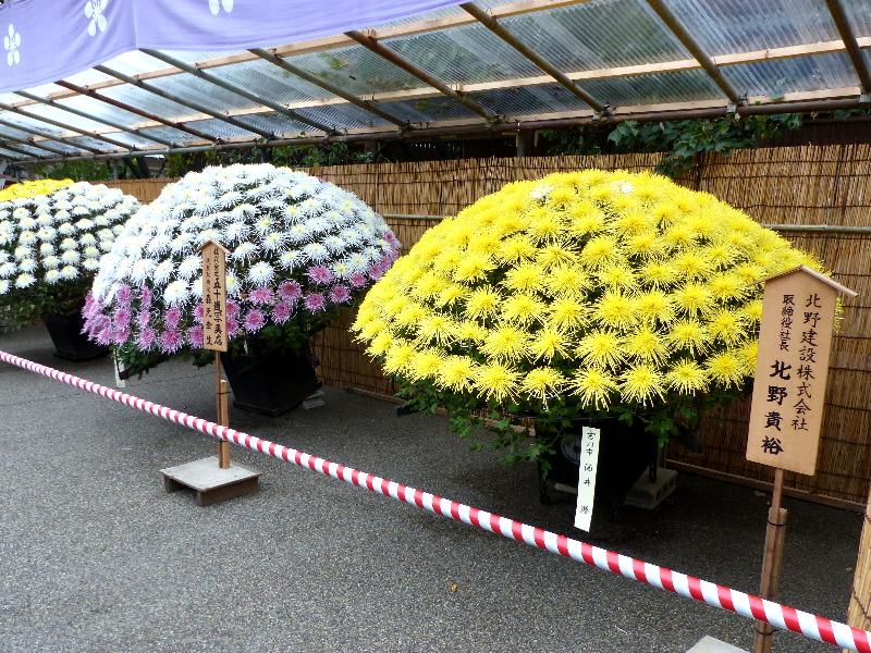 20180909C www.japantoptobottom.com