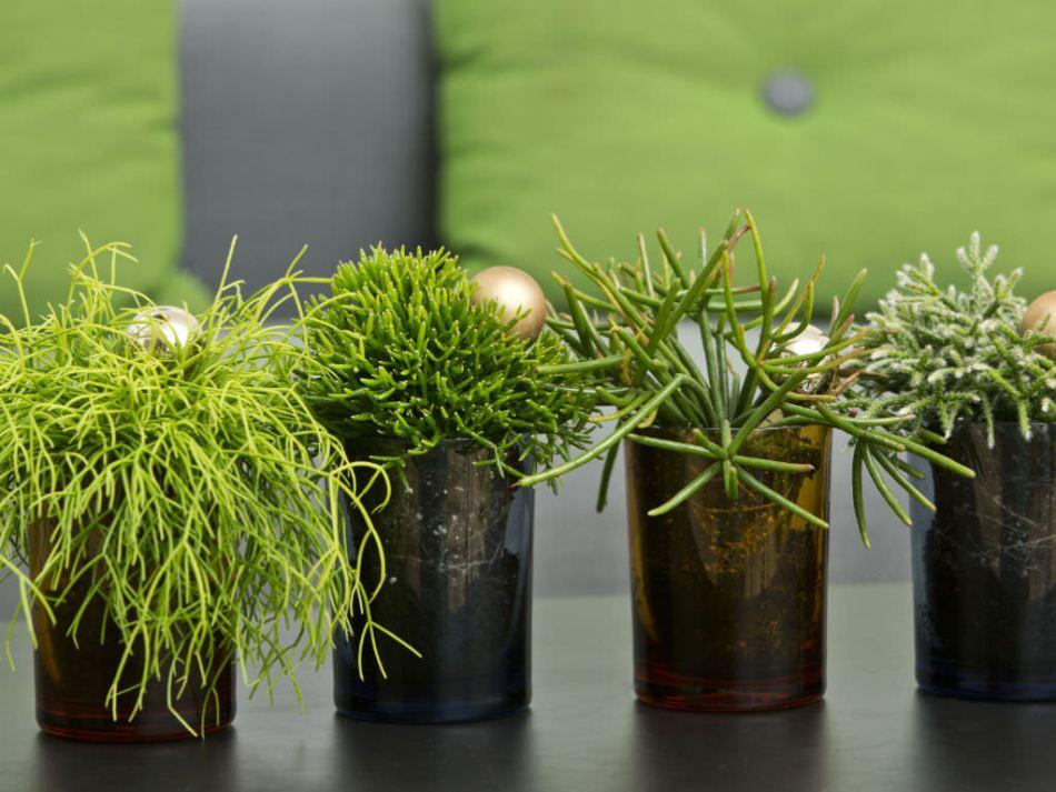 20181203J worldofsucculents.com.jpg