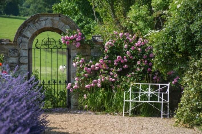 20181226 Constance Spry, DA Roses