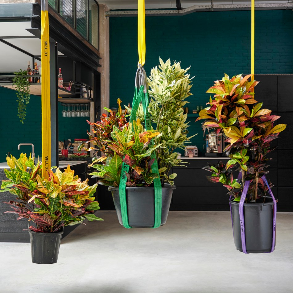 Large crotons in artisanal hanging pots.