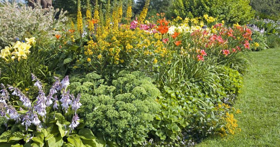 Early fall flower bed