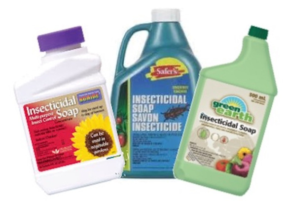 Three brands of insecticidal soap.