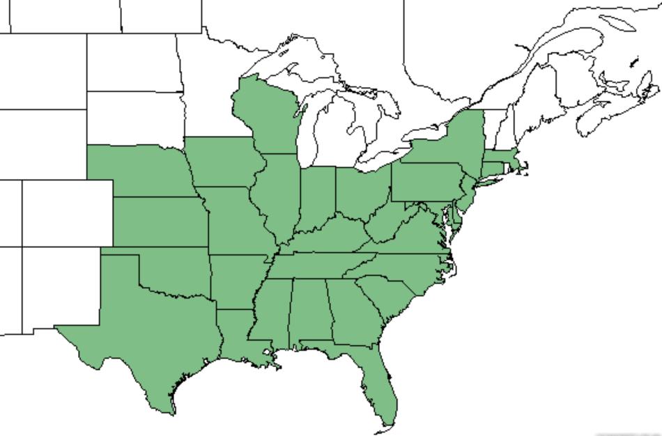 Distribution map of Maryland senna