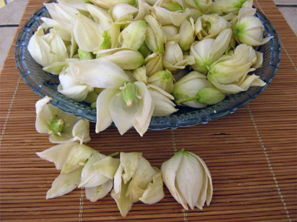White yucca flowers in a bowl.