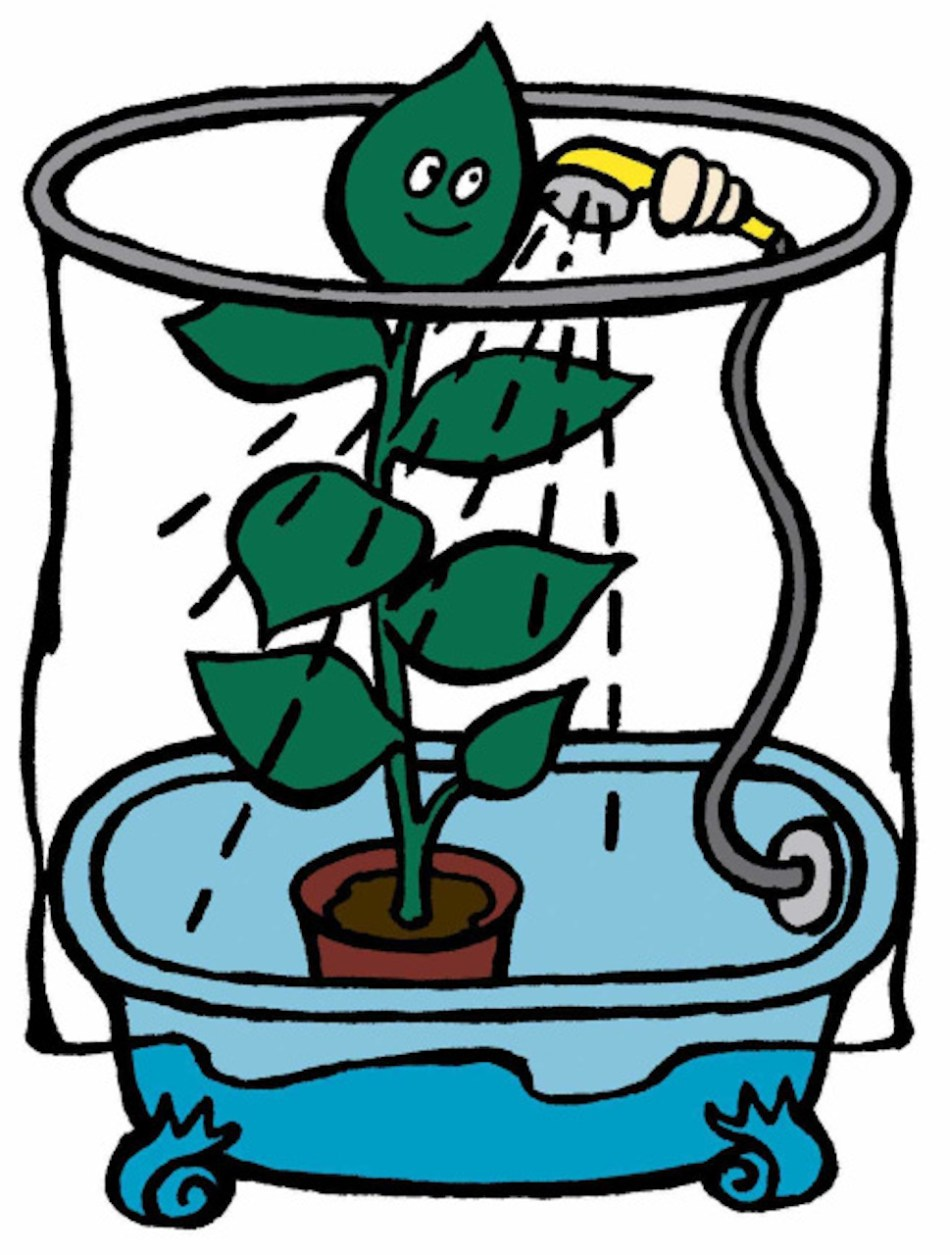Showering a plant.