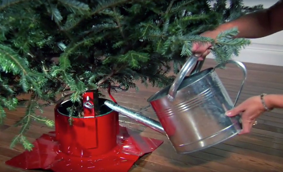 Watering Christmas tree, red stand