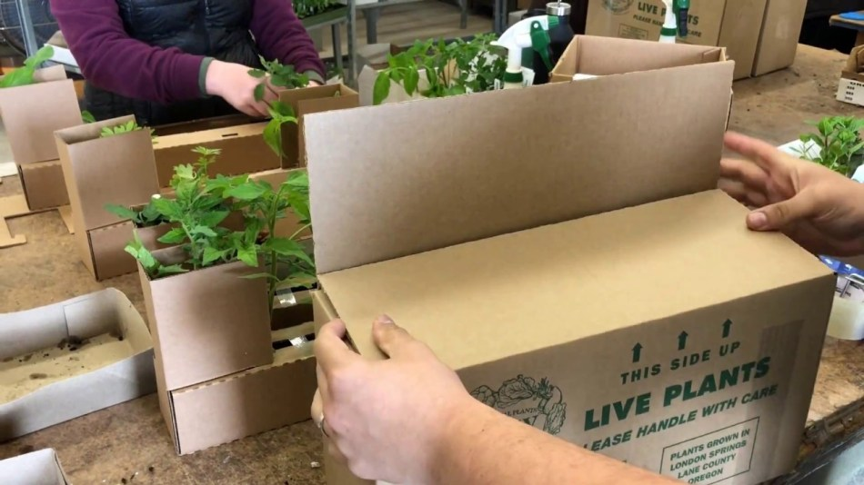 Shipping plants in boxes