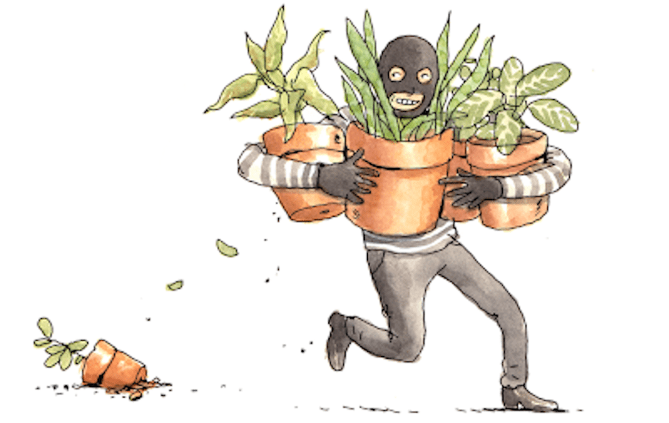 Drawing of man stealing plants.