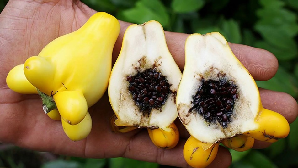 Nipple fruit cut in half, showing white flesh and dark seeds.