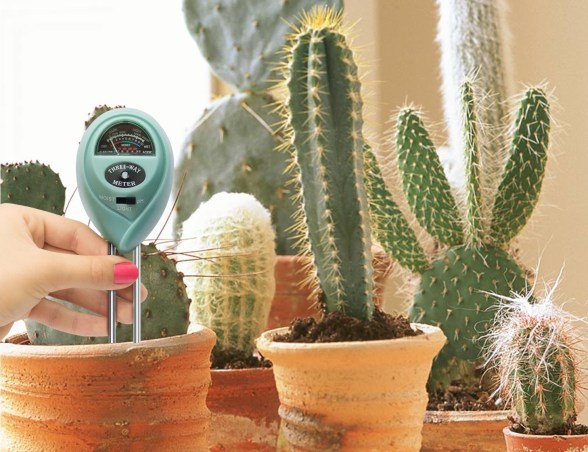 Soil meter checking the humidity level of a spiny cactus. There are several cacti in the photo.