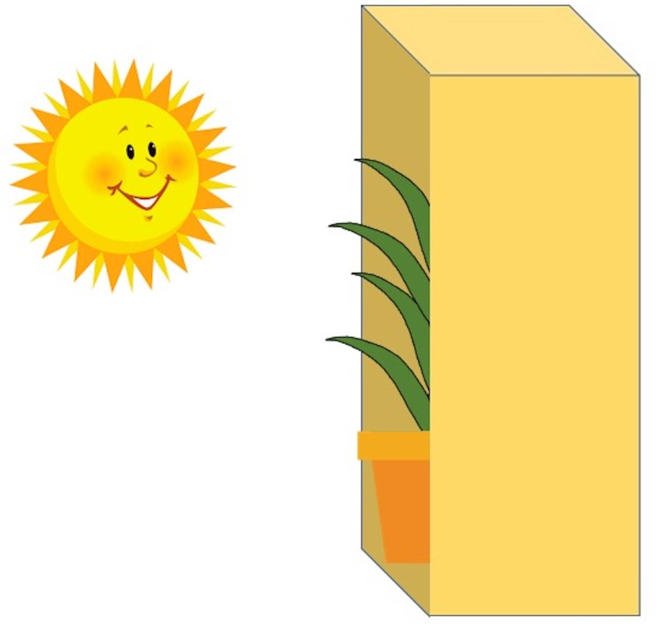 Drawing showing lucky bamboo partly visible on the sunny open side of box.