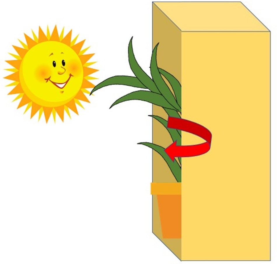 Drawing of lucky bamboo in box, now with a spiral arrow showing it being rotated.