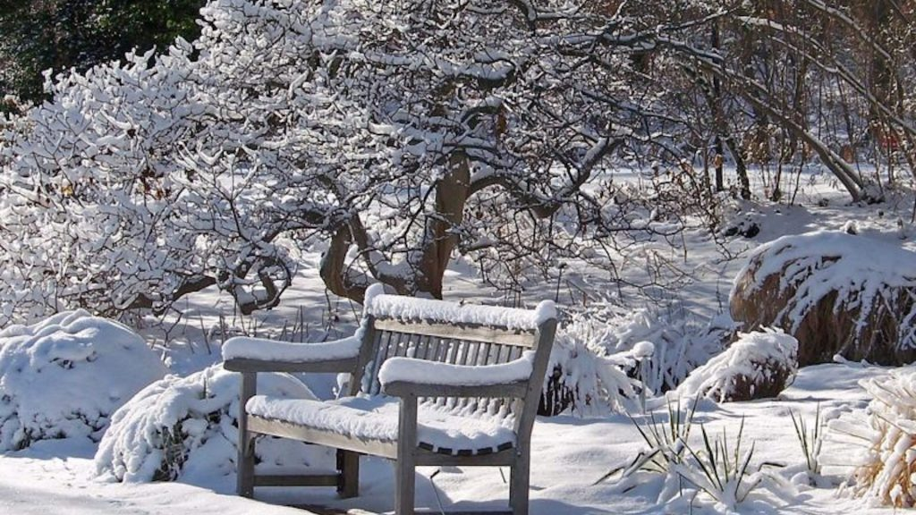 Snow-covered garden with a bench in the foreground