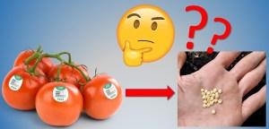 Tomate de supermarché avec émoji douteux, semences de tomate dans une main