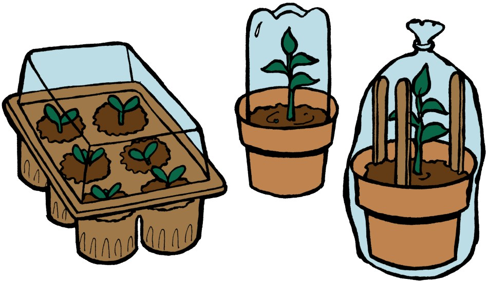 Different domes and mini-greenhouses for cuttings.