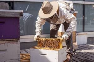 Beekeeper on a rooftop beehive.