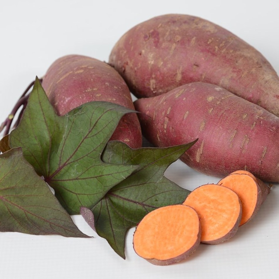 Tatakota sweet potato showing greenish purple lobed leaves and tuber with purple skin and orange flesh