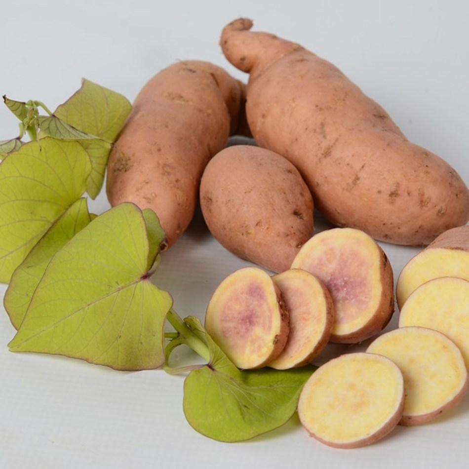 Makatea sweet potato showing chartreuse heart-shaped leaves and tuber with orange skin and white flesh.