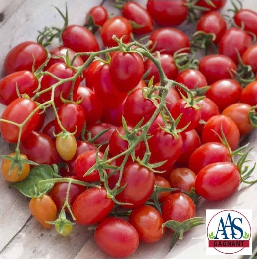Fantastico tomato with many small red fruits
