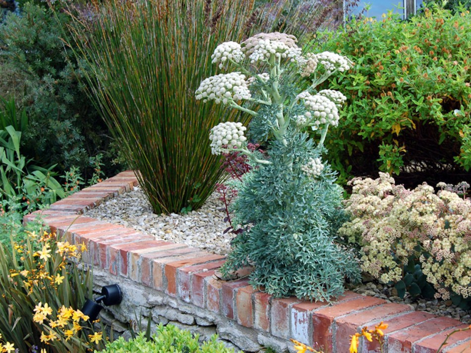 Moon carrot in a raised bed.
