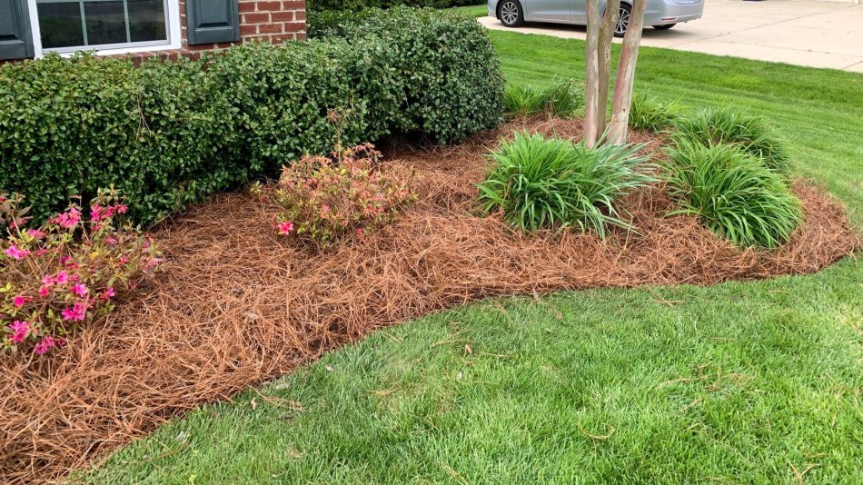 Pine needle mulch in a flower bed.