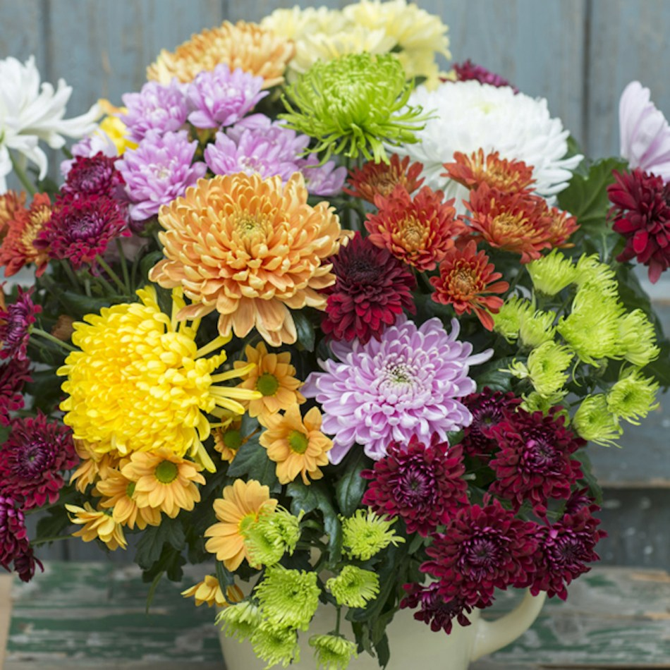 Floral arrangement of chrysanthemums in many colors.