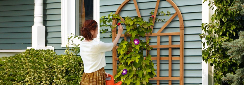 Woman attaching morning glory to thick trellis.